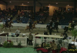 WALKING FOR THE ANGELS HORSE SHOW